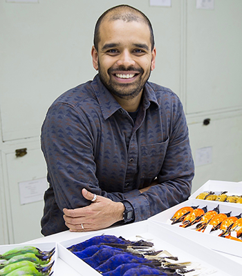 sahas barve sitting at table with bird collection laid out on table
